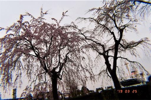 f:id:kyokocanarysan:20190424233642j:image