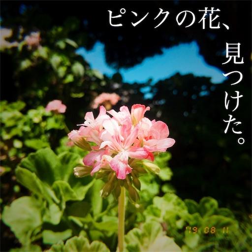 f:id:kyokocanarysan:20190812024845j:image