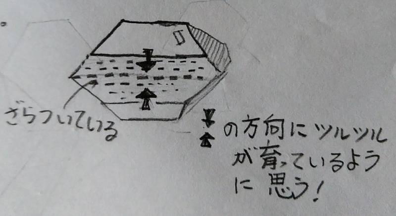 f:id:kyokoippoppo:20210418081716j:plain:w420