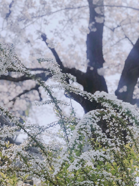 f:id:kyokorose-crystalyoga:20190407172354j:image