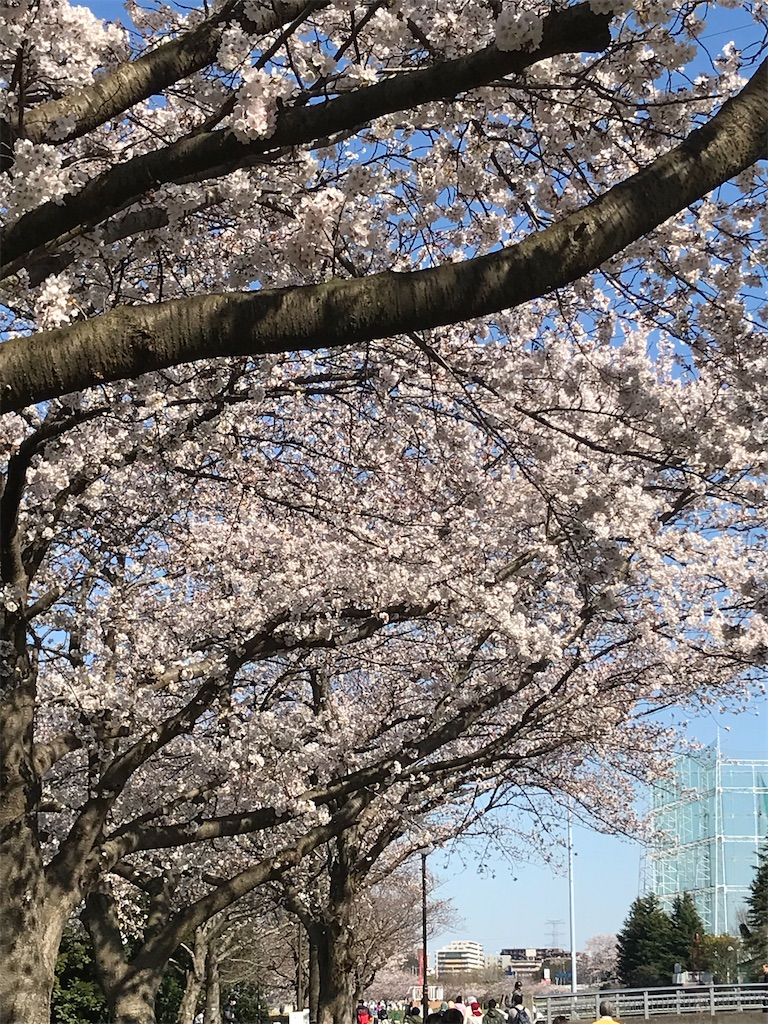 f:id:kyoku1128:20200329192014j:image