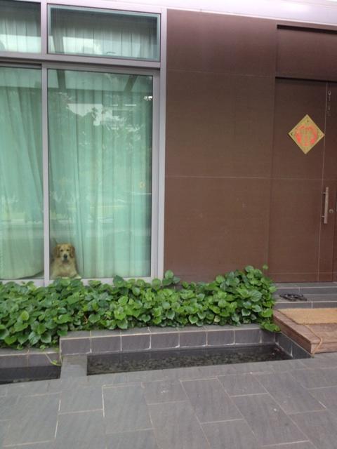 f:id:kyomonatsu:20131207181929j:plain