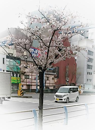 f:id:kyomuji:20170407082222j:plain