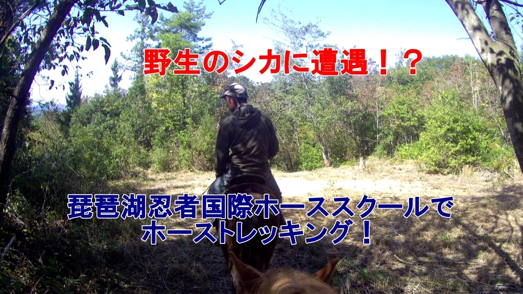 f:id:kyon-rog:20181102212315j:plain
