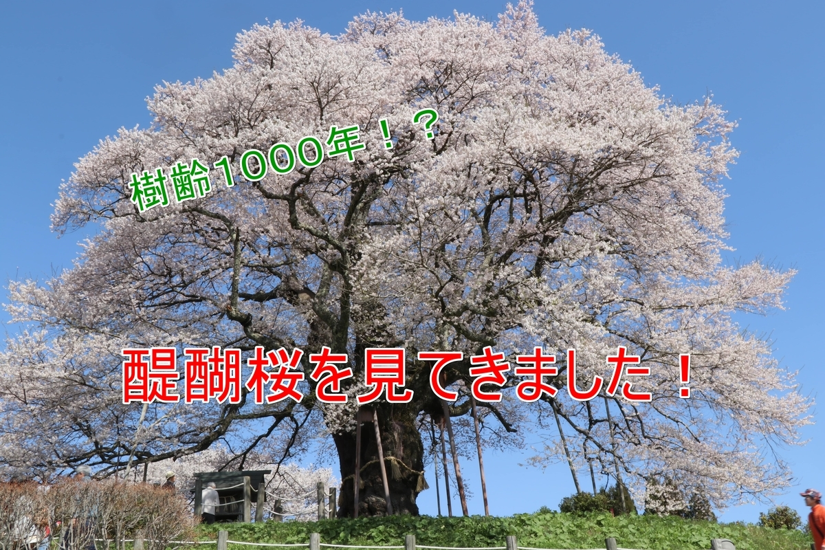f:id:kyon-rog:20190410202431j:plain