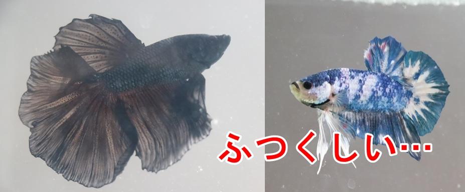 f:id:kyon-rog:20190820203414j:plain