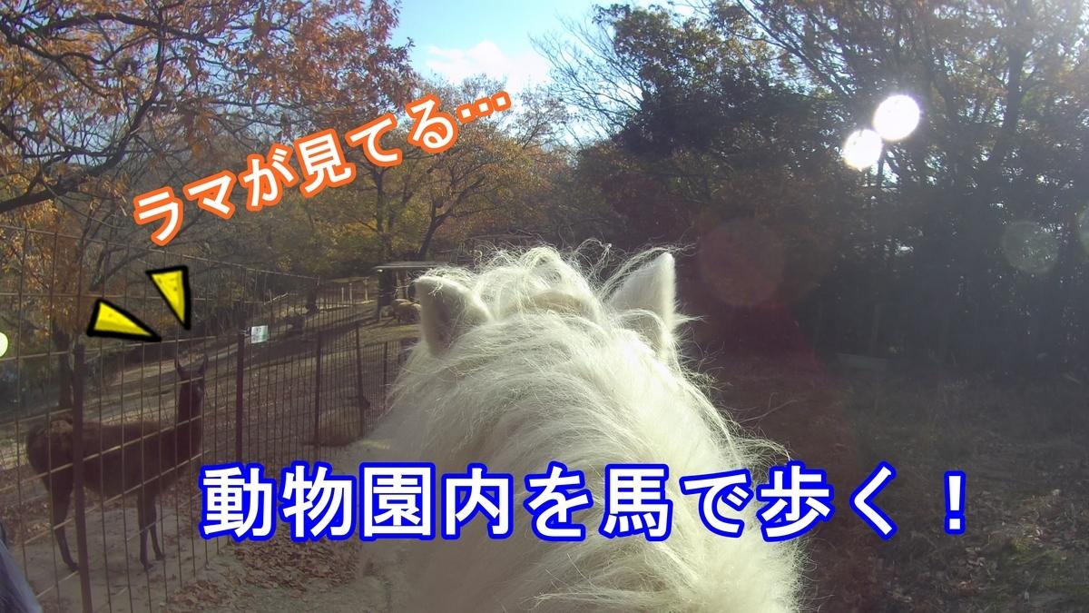f:id:kyon-rog:20191218220722j:plain