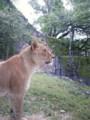 東山ライオン