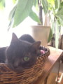 隻眼の黒猫