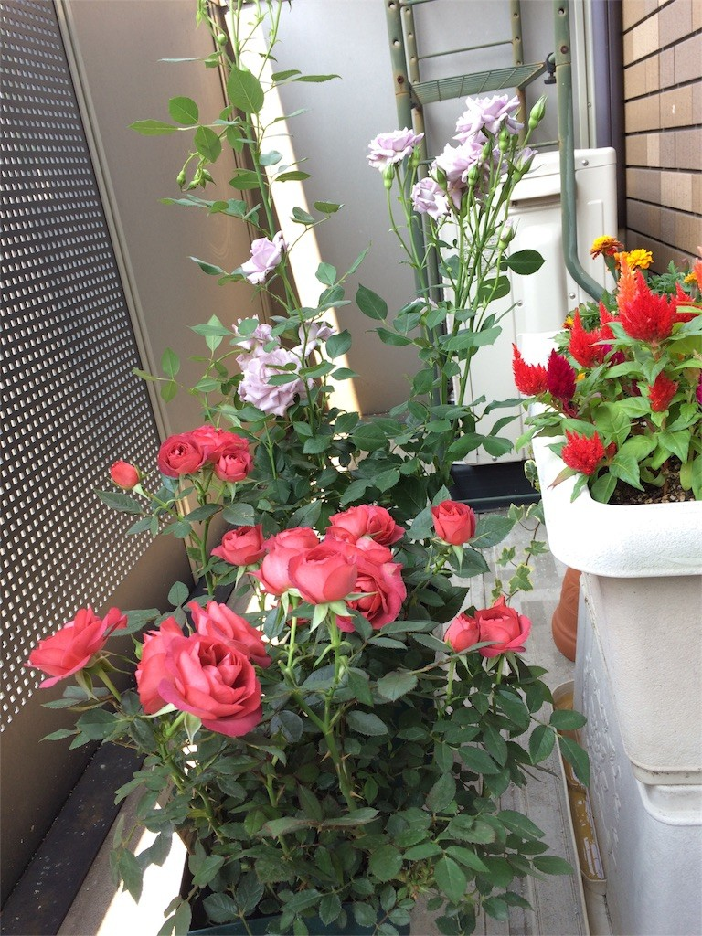 f:id:kyoro99:20160921184013j:image