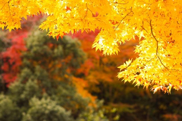 【2018年】京都での紅葉時期をまとめてみた|見頃・時期を大予想
