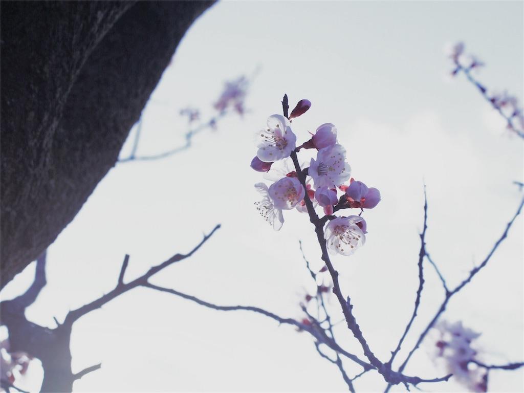 f:id:kyoto_kyo31y:20180129000342j:image