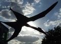 [UMA][翼竜]ビッグバードとサンダーバードの違い