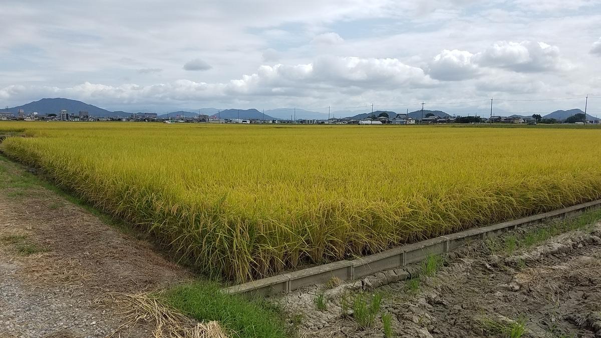 f:id:kyoto_seikatei:20190918144632j:plain