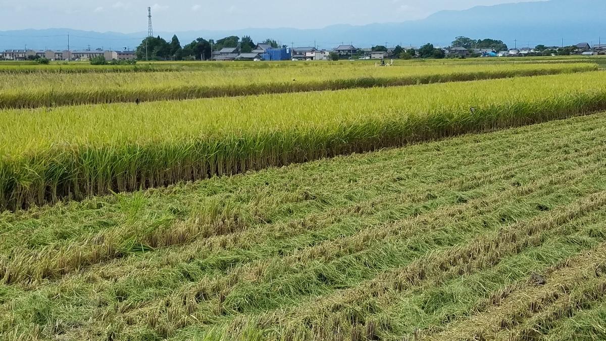 f:id:kyoto_seikatei:20200916144820j:plain
