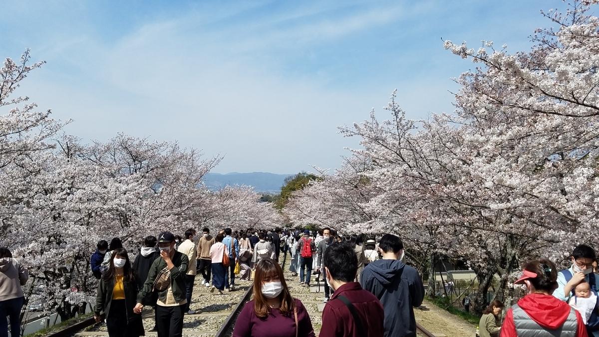 f:id:kyoto_seikatei:20210404155018j:plain