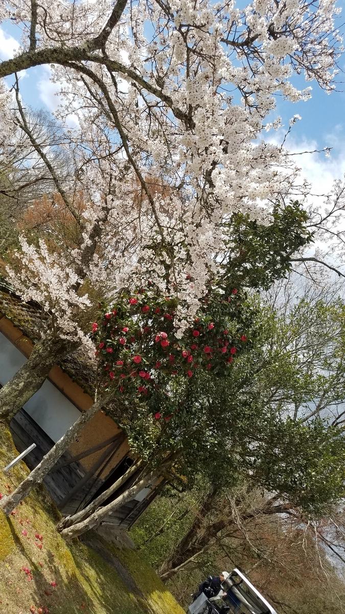 f:id:kyoto_training_center:20190418141732j:plain