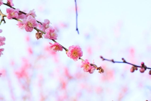 f:id:kyoto_training_center:20210303171958j:image