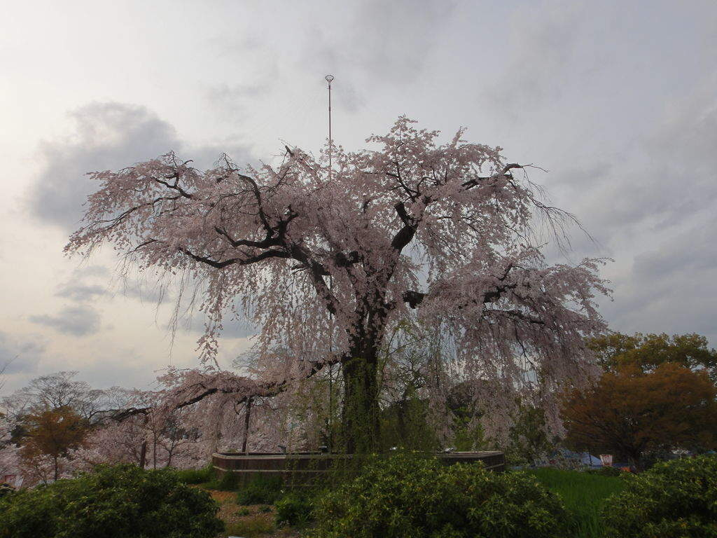 f:id:kyotoburari:20190317120016j:plain