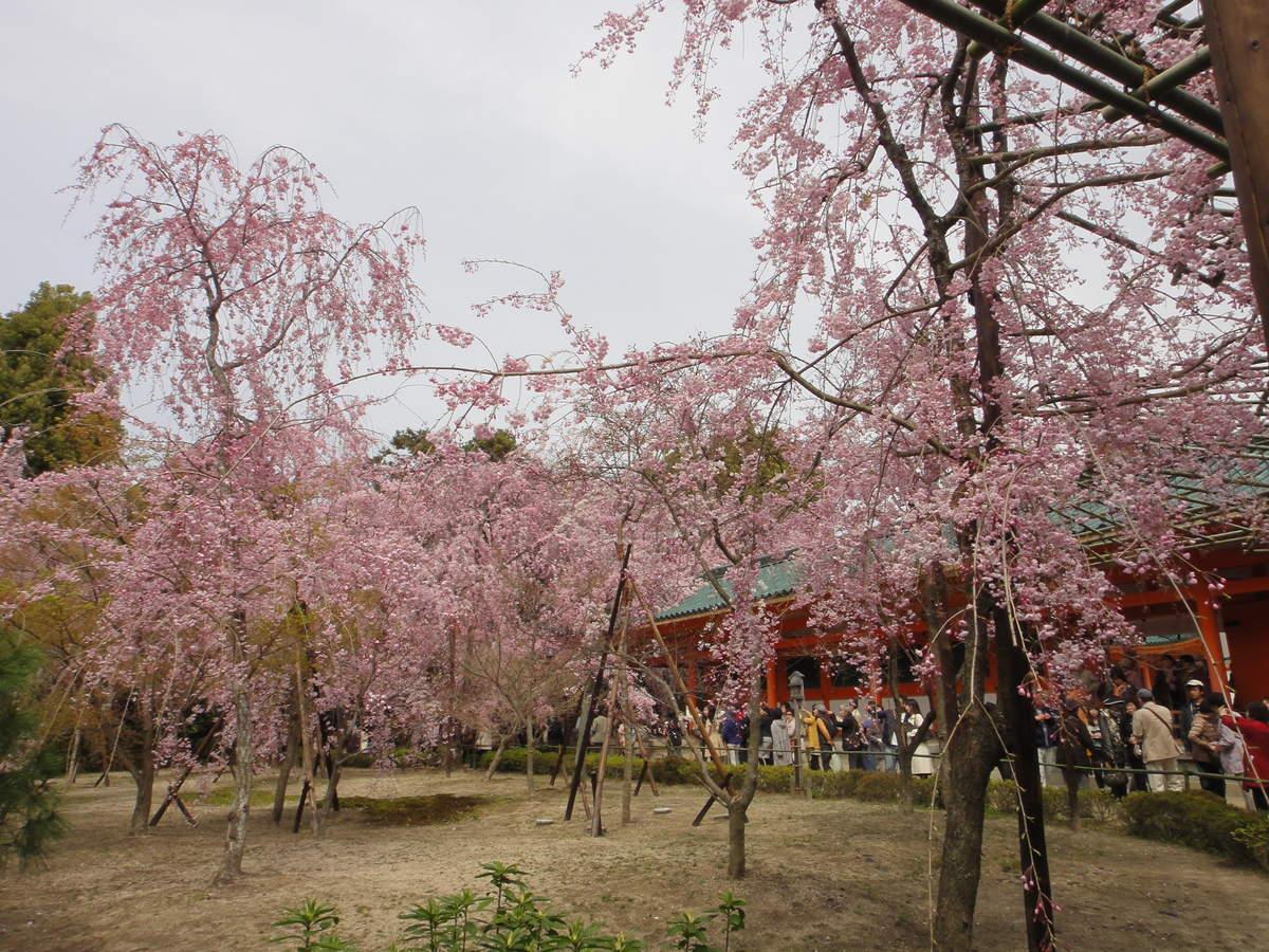 f:id:kyotoburari:20190320074154j:plain