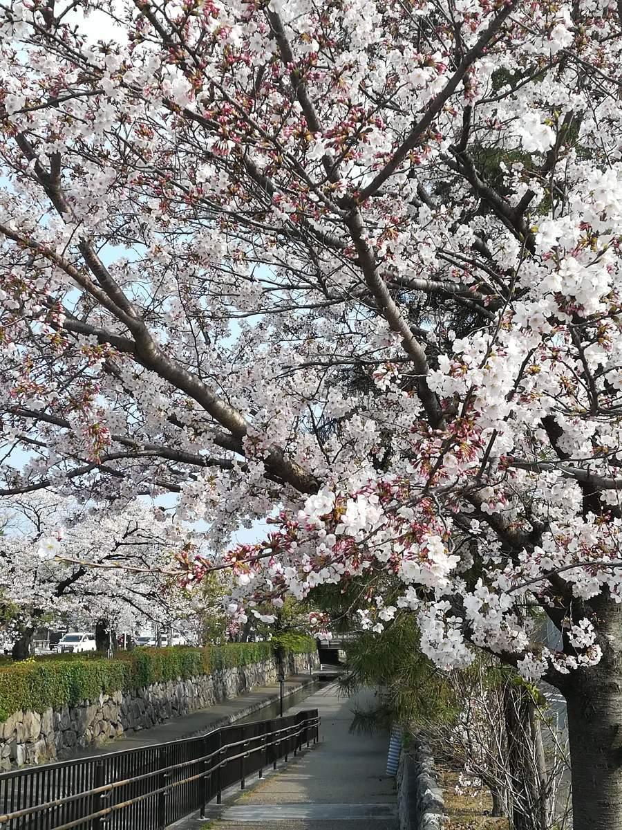 f:id:kyotoburari:20190409074807j:plain