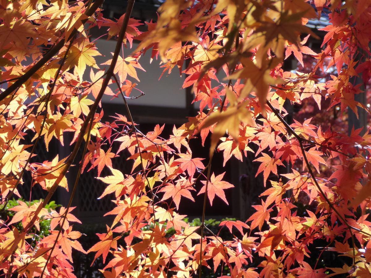 f:id:kyotoburari:20191129180146j:plain