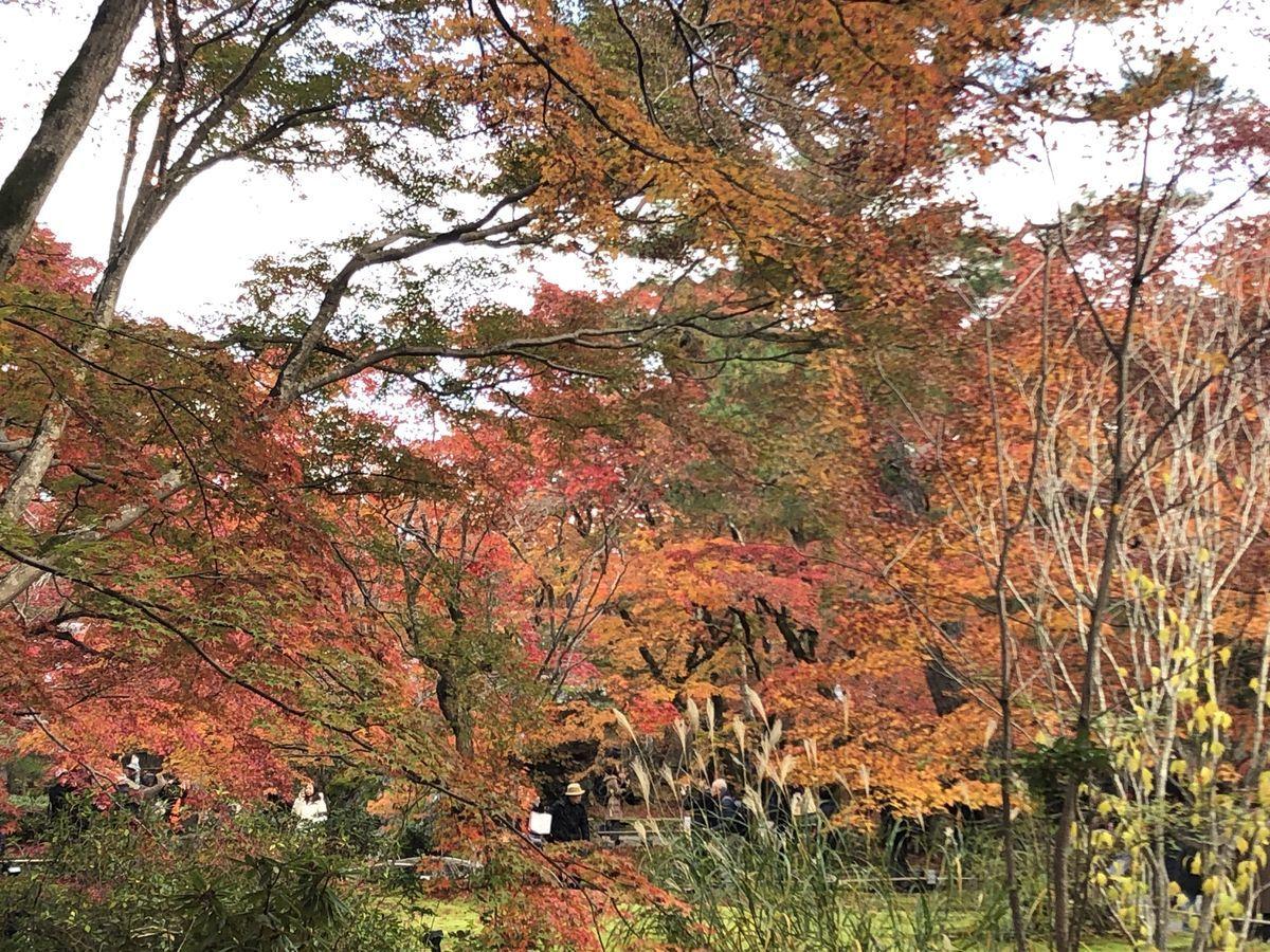 f:id:kyotoburari:20191203180833j:plain