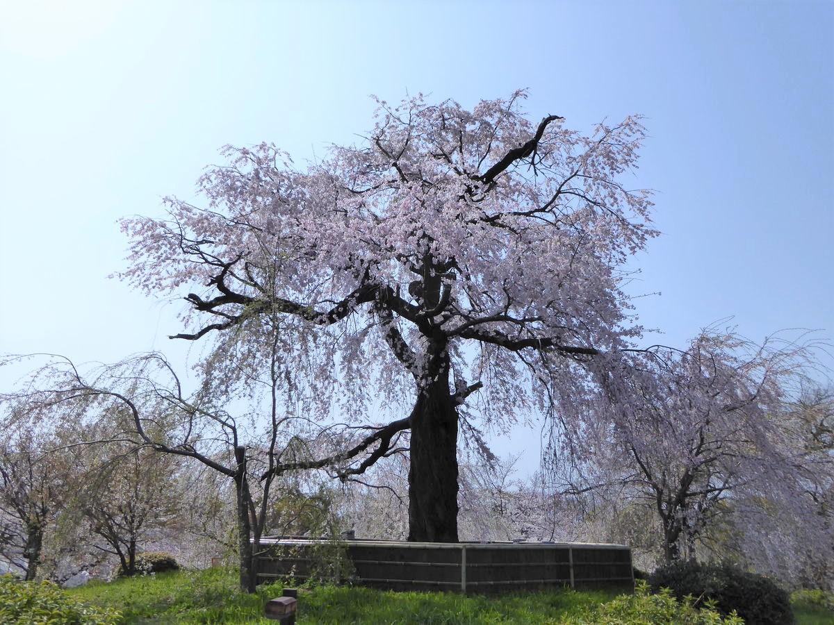 f:id:kyotoburari:20200320145903j:plain