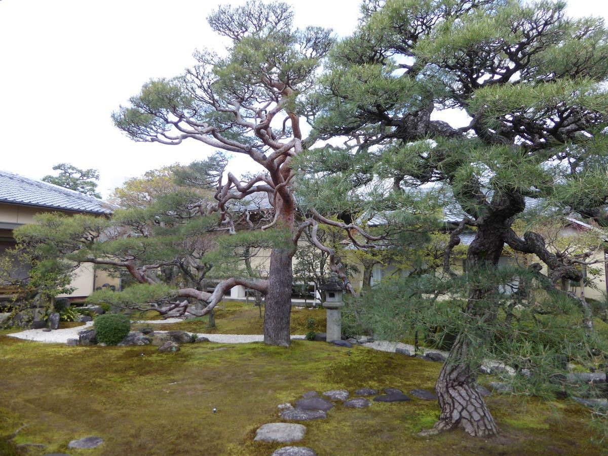 f:id:kyotoburari:20200417155049j:plain