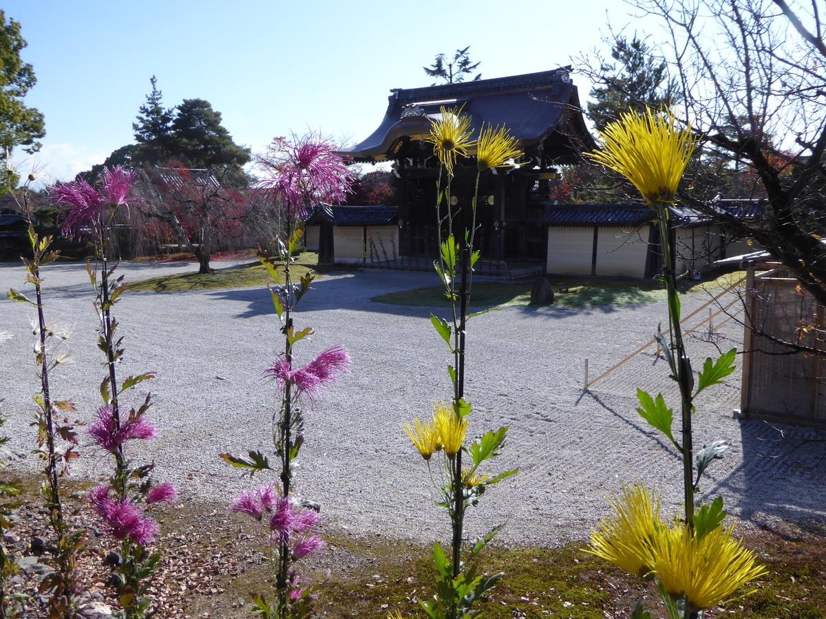 f:id:kyotoburari:20200520153329j:plain