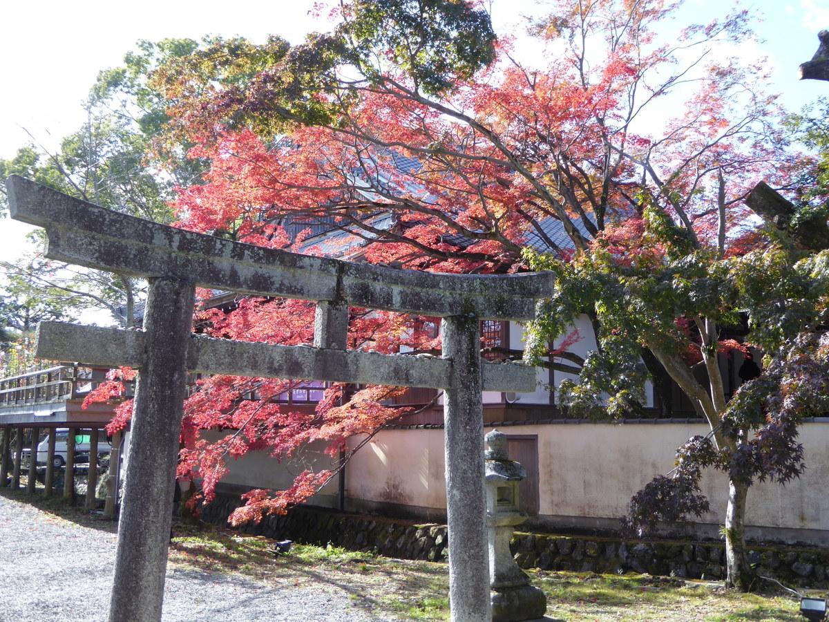 f:id:kyotoburari:20200521154226j:plain