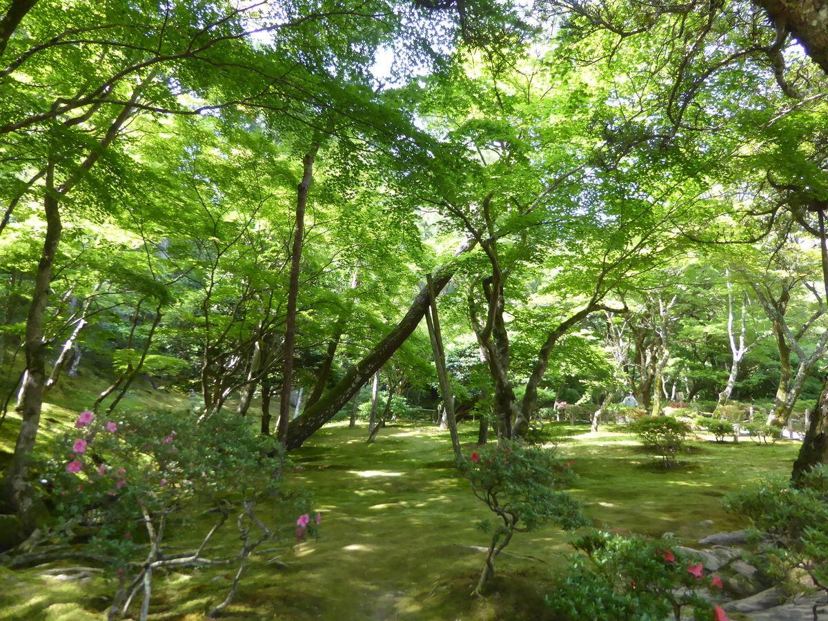 f:id:kyotoburari:20200610215902j:plain