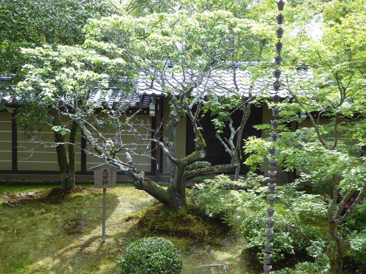 f:id:kyotoburari:20200616142414j:plain
