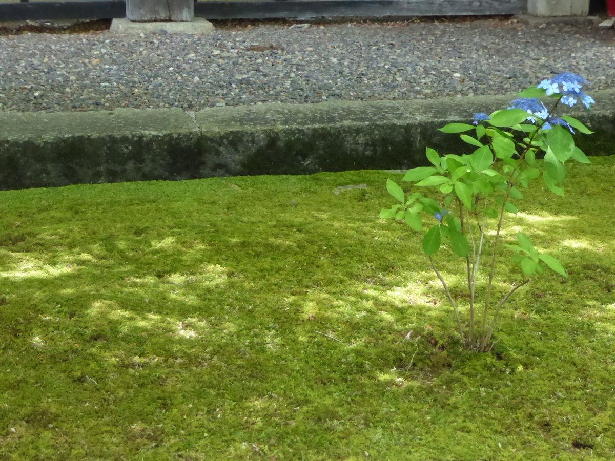 f:id:kyotoburari:20200717141217j:plain
