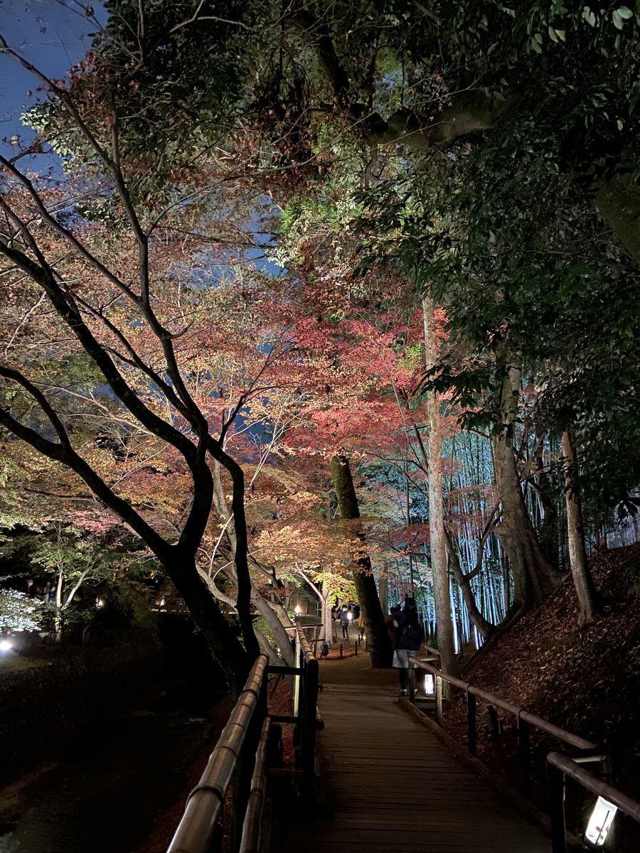 f:id:kyotoburari:20201129081659j:plain