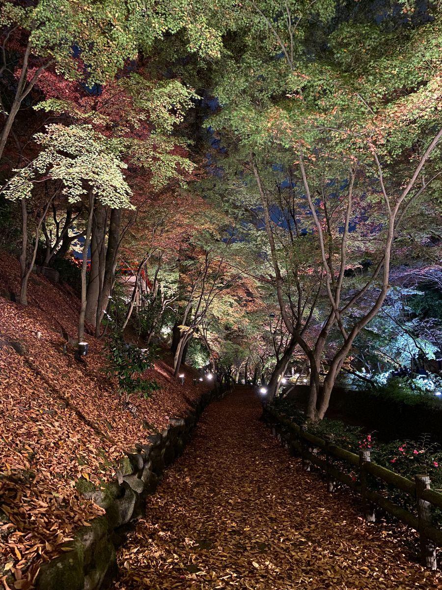 f:id:kyotoburari:20201201172843j:plain