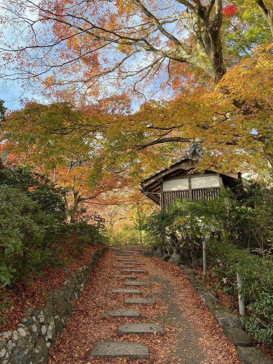 f:id:kyotoburari:20201215163421j:plain