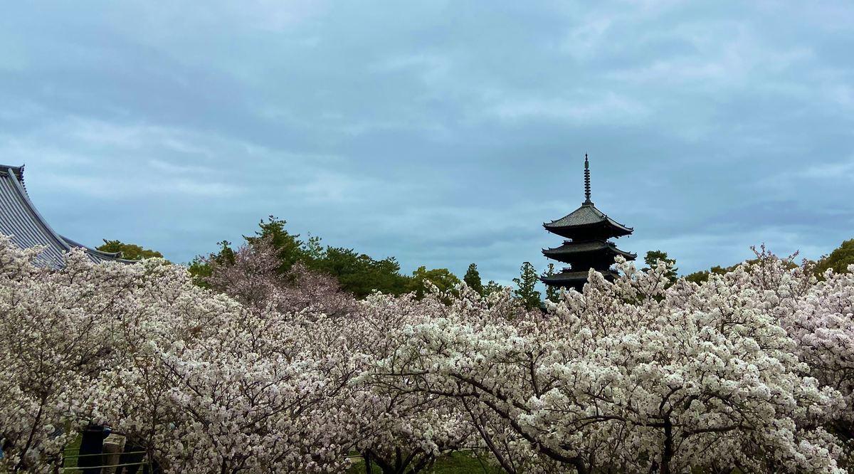 f:id:kyotoburari:20210406203620j:plain