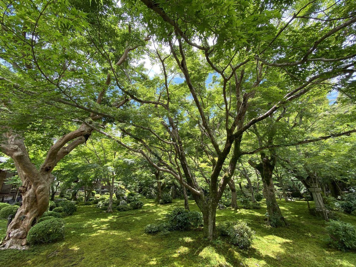 f:id:kyotoburari:20210705174652j:plain