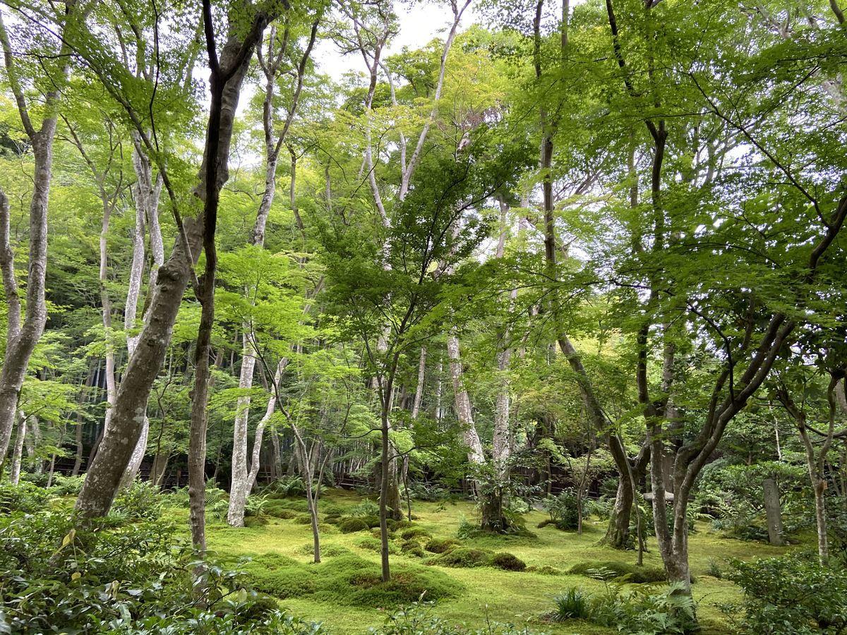 f:id:kyotoburari:20210712160056j:plain