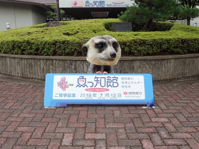 f:id:kyotohokububiyori:20190714104620j:plain