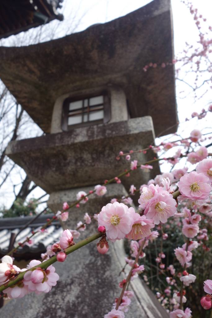 f:id:kyotomichi:20160306143445j:plain