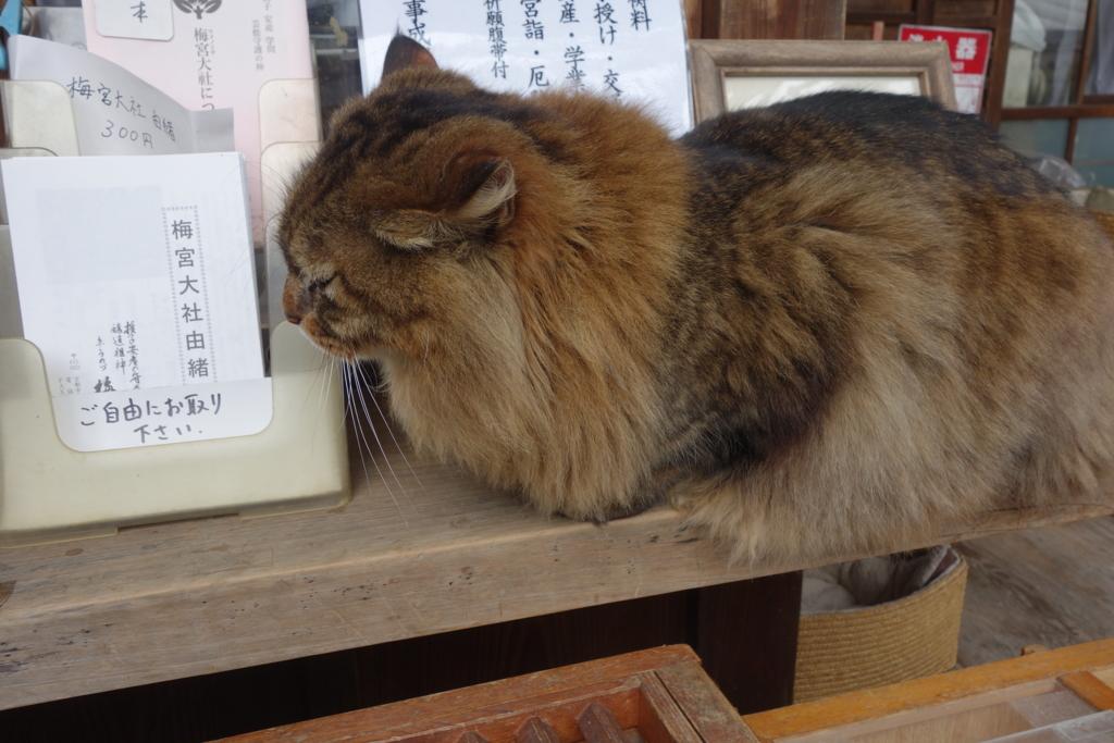 f:id:kyotomichi:20160306150550j:plain