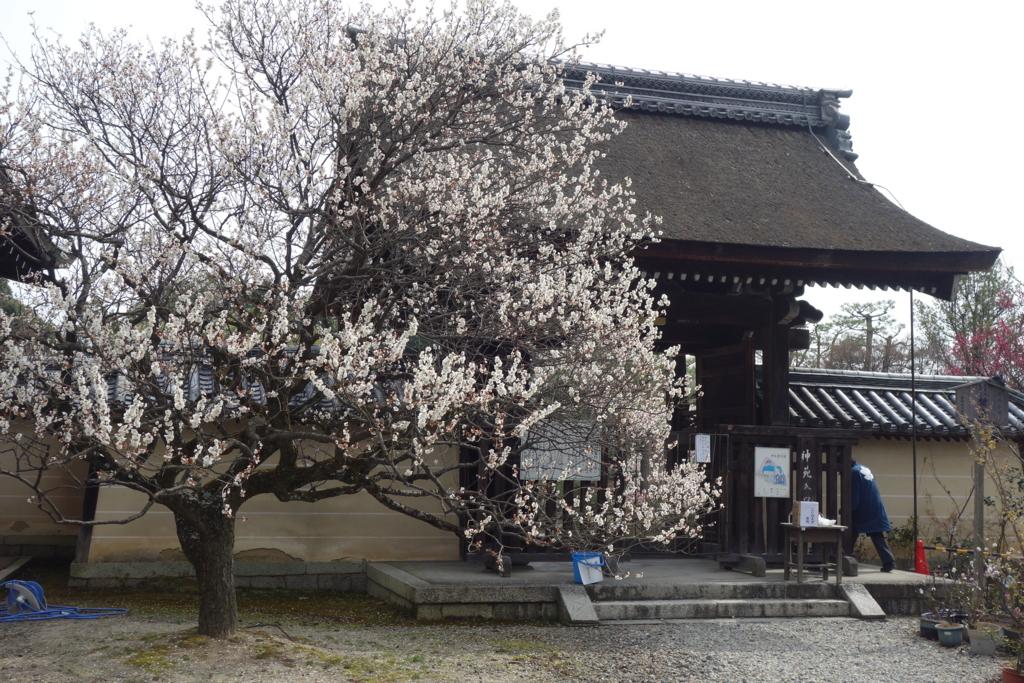 f:id:kyotomichi:20160306151639j:plain
