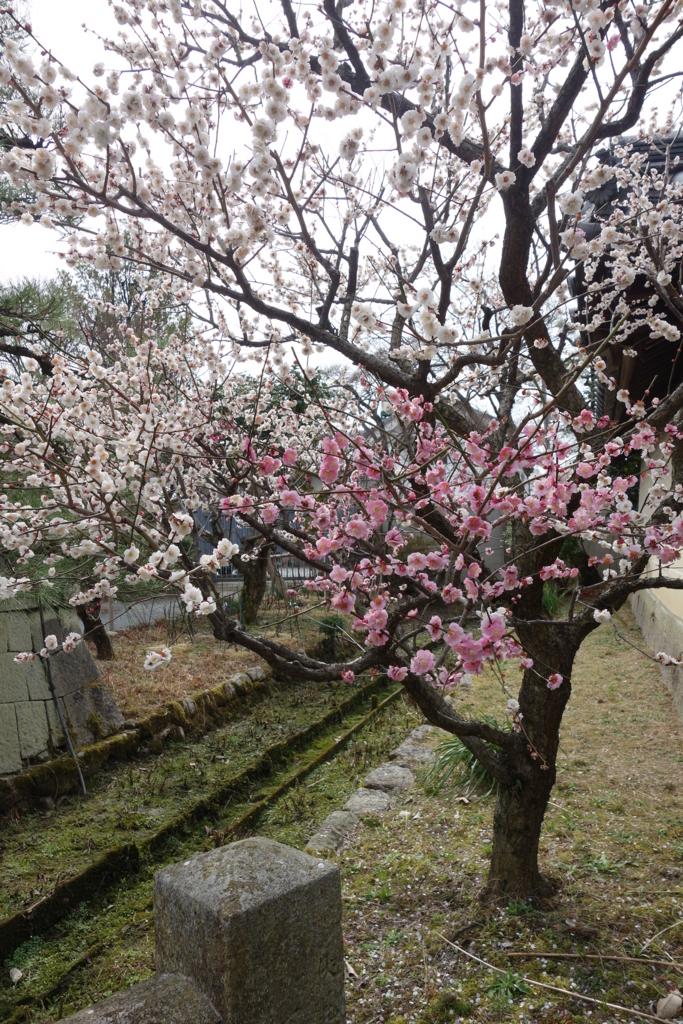f:id:kyotomichi:20160306152228j:plain