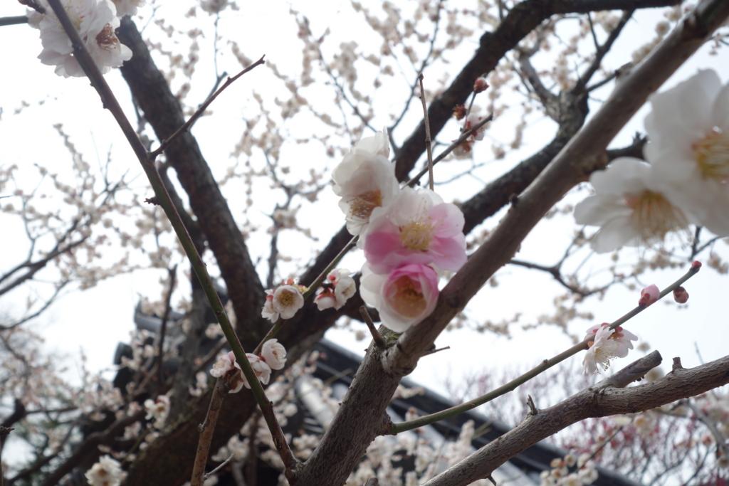 f:id:kyotomichi:20160306152323j:plain