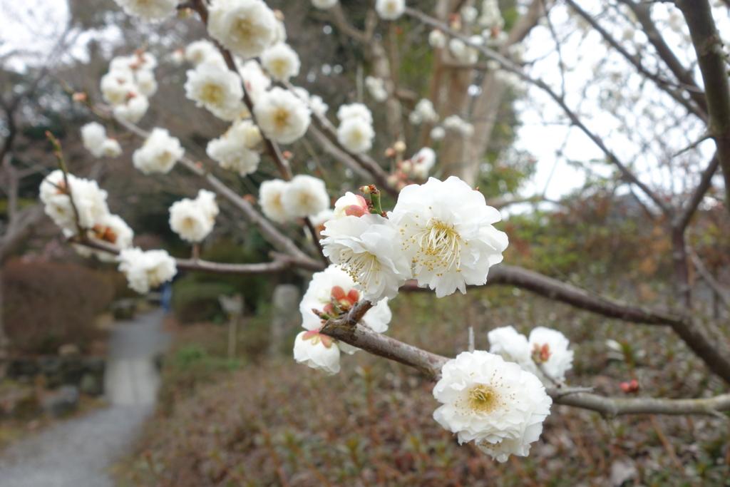 f:id:kyotomichi:20160306152500j:plain