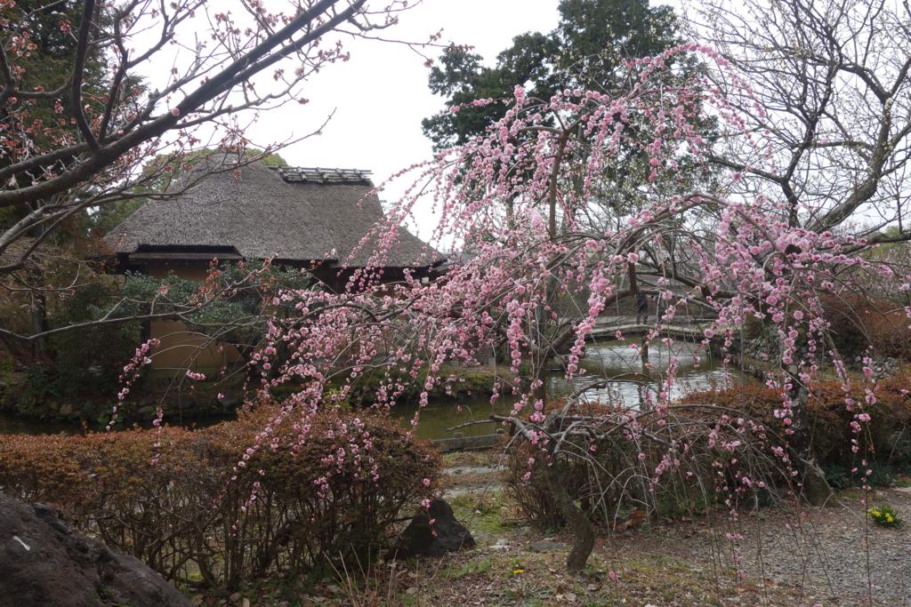 f:id:kyotomichi:20160306152749j:plain