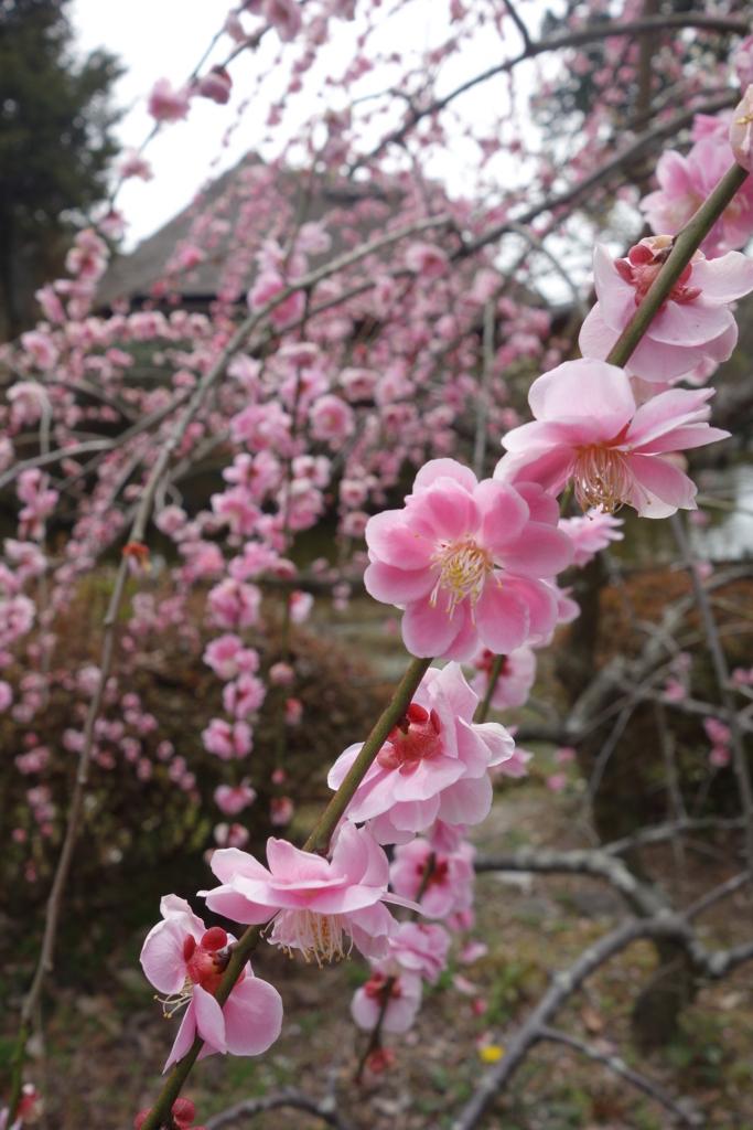 f:id:kyotomichi:20160306152826j:plain