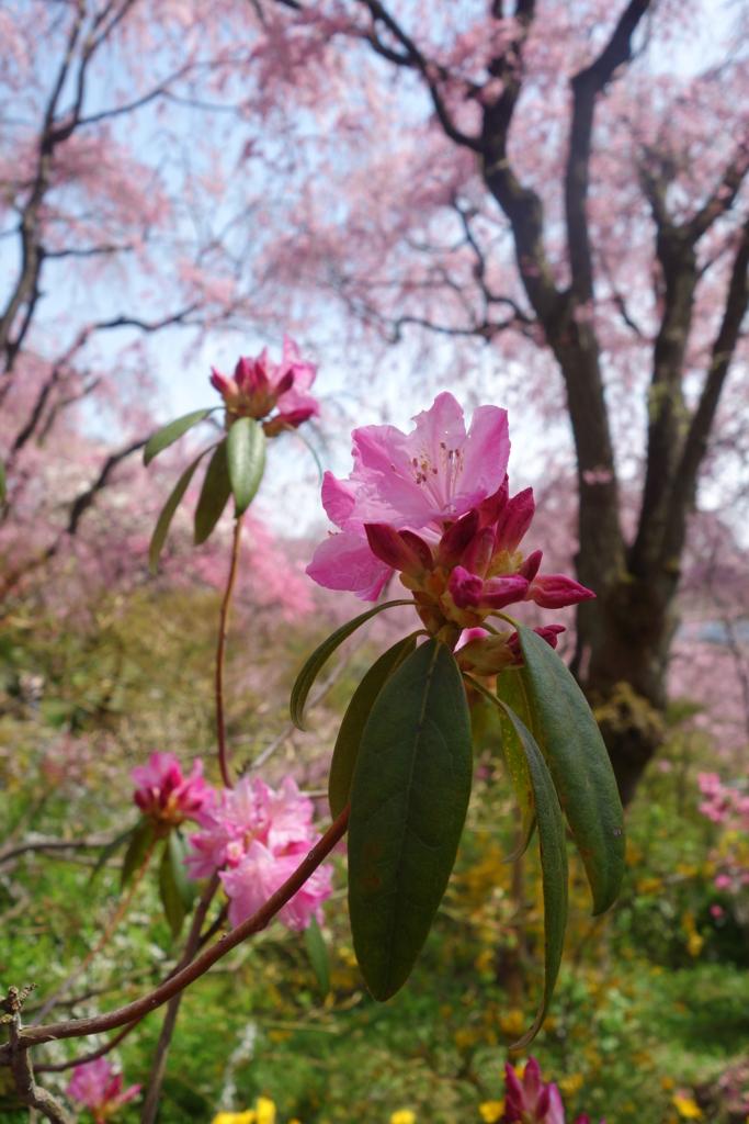 f:id:kyotomichi:20160410235125j:plain